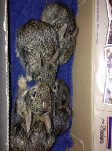 Bunnie rescue box